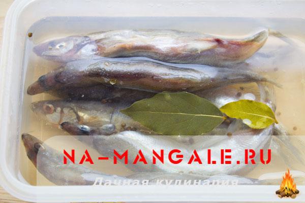 moyva-solenaja-3