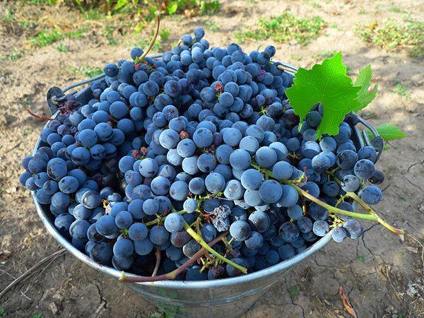 vinogradnyj-kompot-3