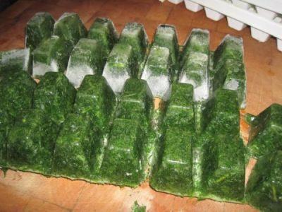 Как лучше сохранить петрушку на зиму свежей в холодильнике, хранение сухой петрушки