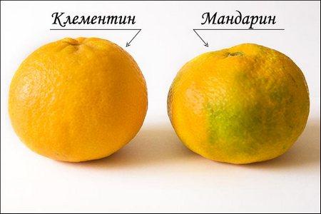chem-otlichayutsya-mandariny 3