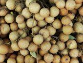 Тайский фрукт лонган