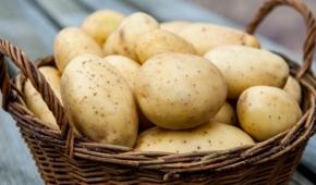 Миниатюра к статье Ранний и неприхотливый сорт картофеля — Жуковский. Фото, описание, нюансы выращивания