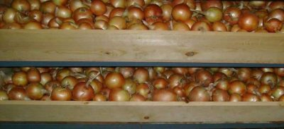 Как хранить лук зимой в домашних условиях и подвале