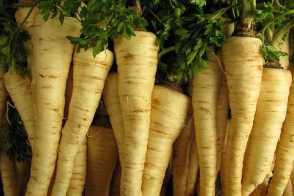 Какими полезными свойствами обладает корень петрушки