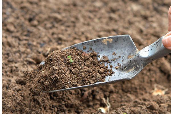 Разбираемся в севообороте: можно ли сажать морковь после моркови или другой культуры? Что сеять до этого овоща?