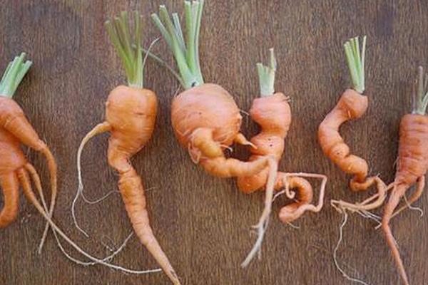 Какую почву любит морковь: какая земля нужна для посадки, как правильно сделать грядки, а также как осуществить полную подготовку грунта
