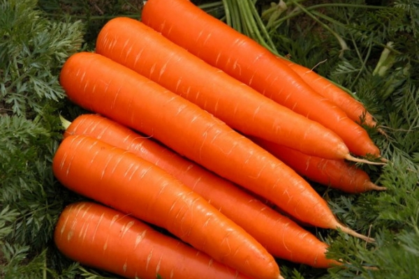 Раннеспелая морковь
