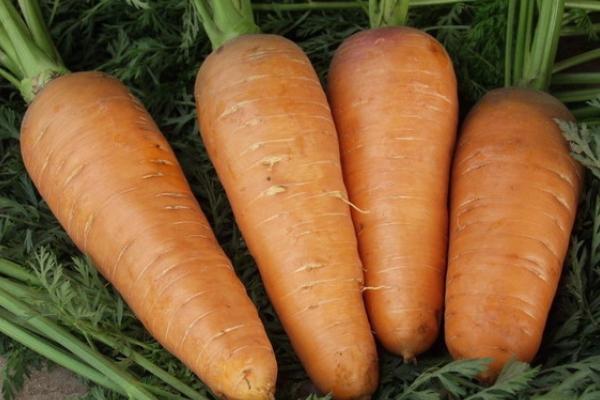 Морковь Шантенэ Роял Поиск (драже) 300 шт
