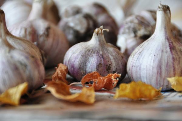 Польза и вред чеснока для печени