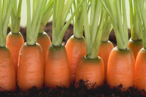 Схема посадки моркови