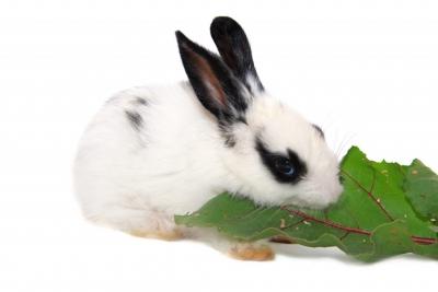 Можно ли давать свекольную ботву кроликам и саму свеклу, какую и в каких количествах