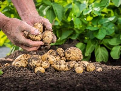 Почва для клубники - как подготовить, какая нужна для посадки, обработка
