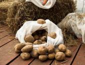 Срок хранения картофеля