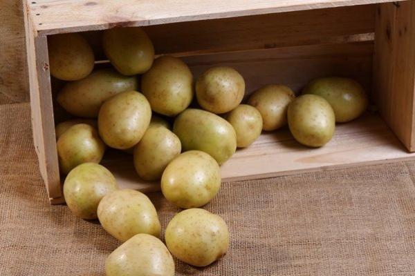 Как хранить картошку и лук в квартире