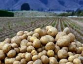Хранение картофеля в яме