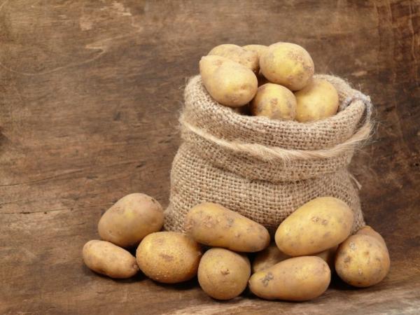 Картофель Королева Анна – описание сорта, отзывы, фото