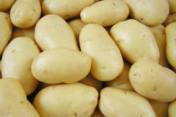 Можно ли мыть картофель перед закладкой на хранение