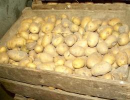 Как правильно хранить картофель в подвале