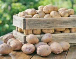 Правильные условия хранения картофеля