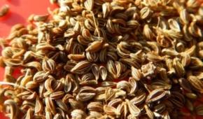 Миниатюра к статье Советы огородникам: как прорастить семена петрушки перед посевом быстро и правильно?