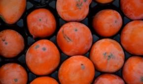 Миниатюра к статье Оранжевая хурма с черными пятнами: что это за отметины и можно ли есть такую ягоду?