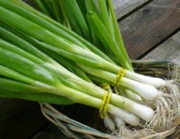 Химический состав и калорийность зеленого лука